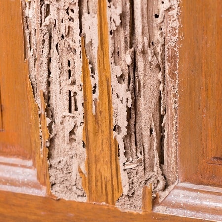 wood door with termites damage